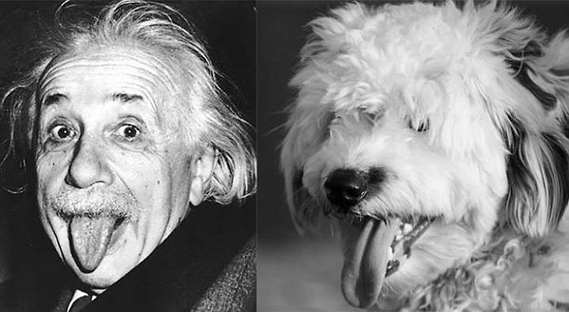 20 Animals That Look Just Like Famous People - Page 4 ...